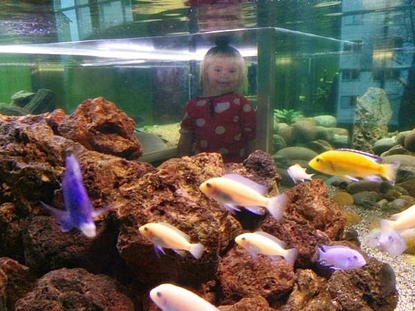 tomtits, tom titt, södertälje, akvarium